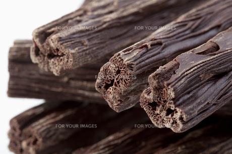 tree chocolateの写真素材 [FYI00802436]