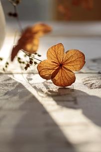 autumnal decorationの写真素材 [FYI00802888]