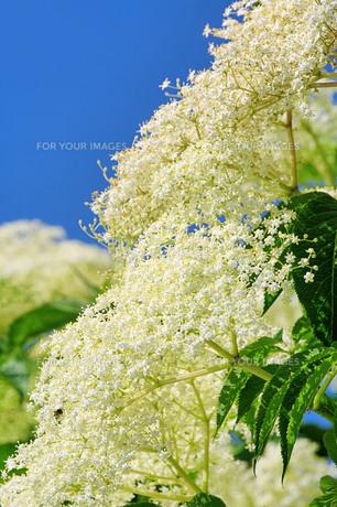 plants_flowersの素材 [FYI00803046]