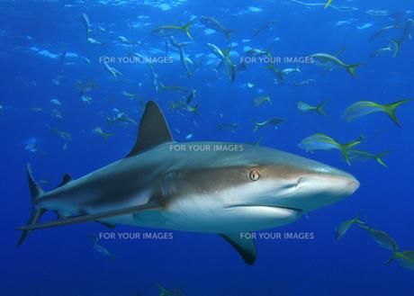 fishes_crustaceansの写真素材 [FYI00803290]