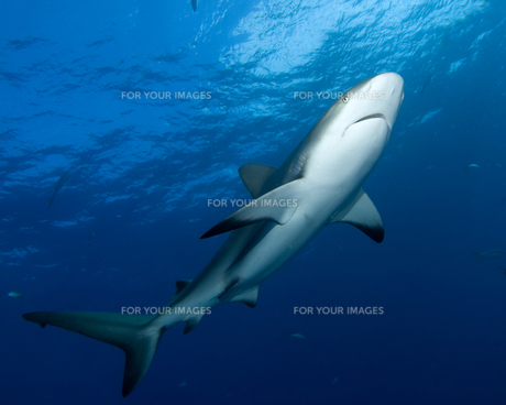 fishes_crustaceansの写真素材 [FYI00803292]