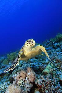 fishes_crustaceansの写真素材 [FYI00803294]