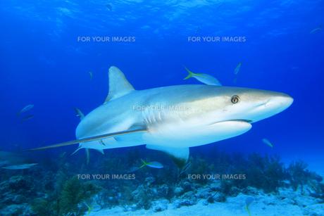 fishes_crustaceansの写真素材 [FYI00803297]
