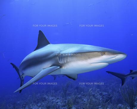 fishes_crustaceansの写真素材 [FYI00803299]