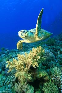 fishes_crustaceansの写真素材 [FYI00803300]