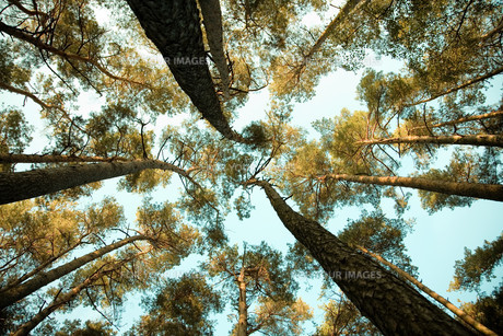 forestの素材 [FYI00803636]