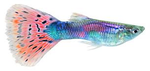 fishes_crustaceansの写真素材 [FYI00803904]