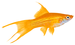 fishes_crustaceansの写真素材 [FYI00803905]