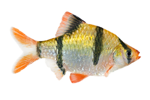 fishes_crustaceansの写真素材 [FYI00803910]