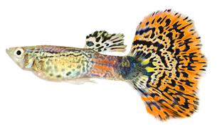fishes_crustaceansの写真素材 [FYI00803912]