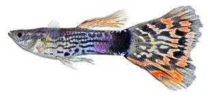 fishes_crustaceansの写真素材 [FYI00803916]