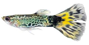 fishes_crustaceansの写真素材 [FYI00803919]