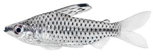 fishes_crustaceansの写真素材 [FYI00803920]