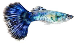 fishes_crustaceansの写真素材 [FYI00803974]