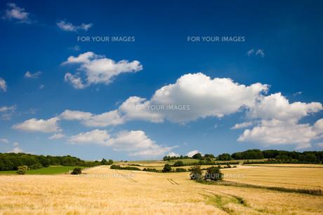 landscapesの素材 [FYI00804071]