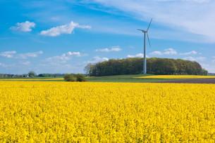 rape field and wind turbineの写真素材 [FYI00804316]