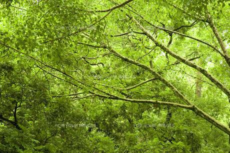 nature_environmentの素材 [FYI00804434]