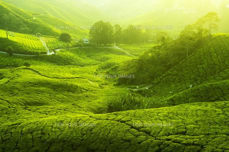 nature_environmentの写真素材 [FYI00804445]