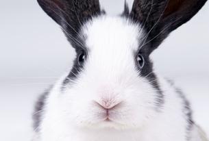 rabbitの写真素材 [FYI00804463]