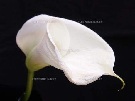 plants_flowersの素材 [FYI00804483]