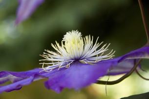 plants_flowersの素材 [FYI00804614]