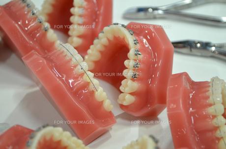 orthodonticsの素材 [FYI00804674]