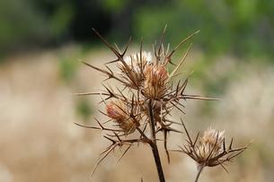 plants_flowersの素材 [FYI00804740]