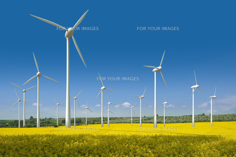wind turbines in a rapeseed fieldの写真素材 [FYI00804894]