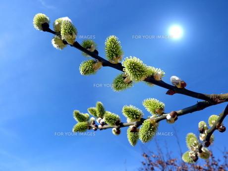 bloomの写真素材 [FYI00805315]