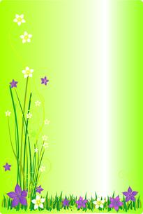 spring flower meadow greenの写真素材 [FYI00805638]
