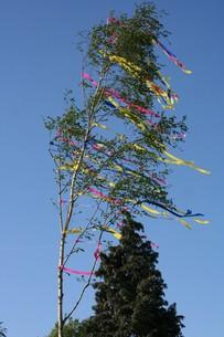 maypole in windの写真素材 [FYI00805640]
