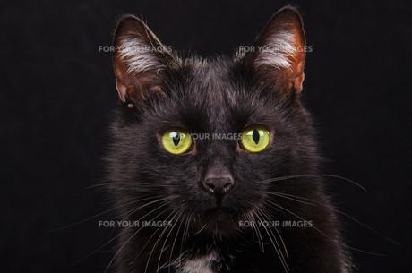home_animalsの写真素材 [FYI00805668]