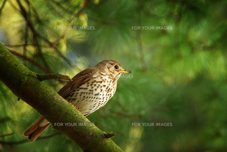 birdの写真素材 [FYI00806113]