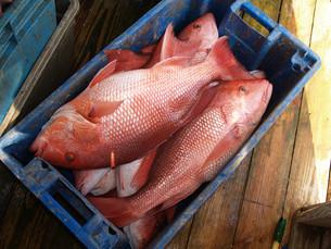 fishes_crustaceansの写真素材 [FYI00806322]