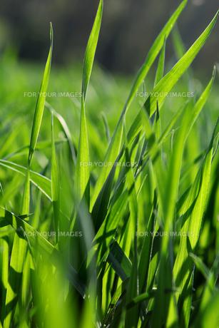 greenの素材 [FYI00806344]