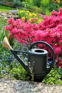 watering the garden with azaleaの写真素材 [FYI00806449]
