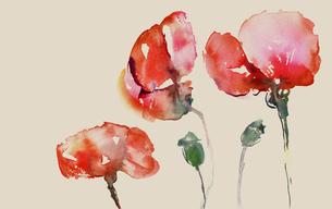 capsules with poppiesの写真素材 [FYI00806673]