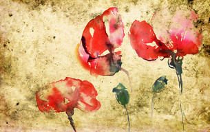 capsules with poppiesの写真素材 [FYI00806679]