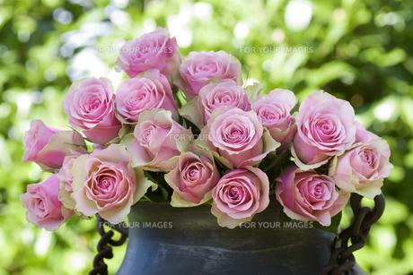 plants_flowersの写真素材 [FYI00806689]