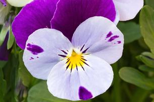 plants_flowersの素材 [FYI00806858]