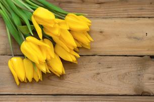 plants_flowersの写真素材 [FYI00806913]