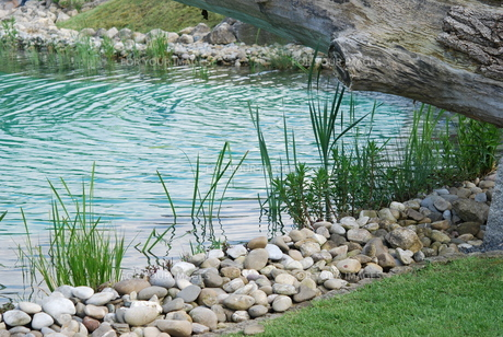 water plant seedling plant pond shoreの素材 [FYI00806943]
