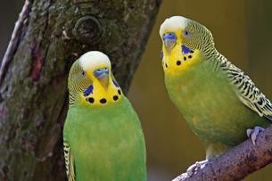 birdの写真素材 [FYI00807132]
