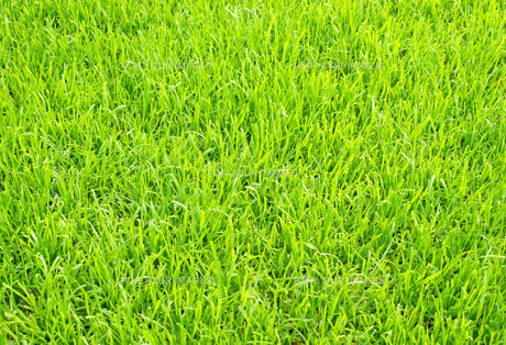 football turf - soccer grassの写真素材 [FYI00807305]