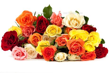 rosesの写真素材 [FYI00807868]