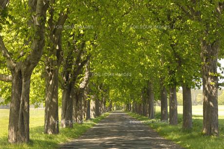 highway in germanyの写真素材 [FYI00808189]