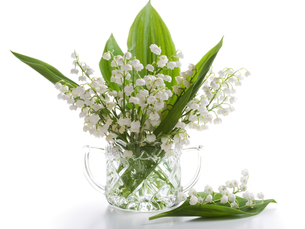 lily of the valleyの写真素材 [FYI00808280]