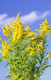 plants_flowersの素材 [FYI00808356]