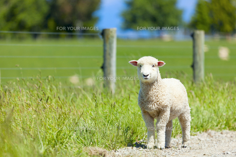 useful_animalsの写真素材 [FYI00808649]