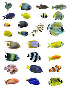 fishes_crustaceansの写真素材 [FYI00808817]